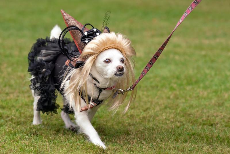 Costume-Teri's pup-KDS05436