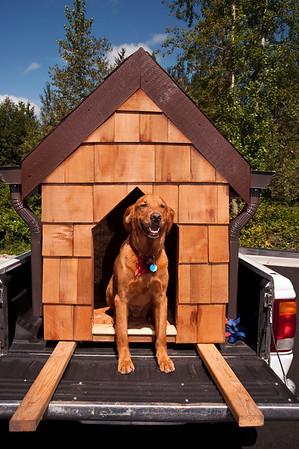 Doggiestock promo-Tango Linden in the doghouse-North Bend, WA 8-20-2010