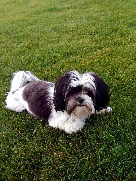 Winnie in the grass-Snoqualmie Point Park, WA 8-2009