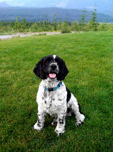 Maggie's Tucker @ Snoqualmie Point Park, WA 8-26-2009