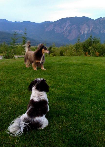 Elliot & Winnie on the lawn @ Snoqualmie Point Park, WA 8-2009
