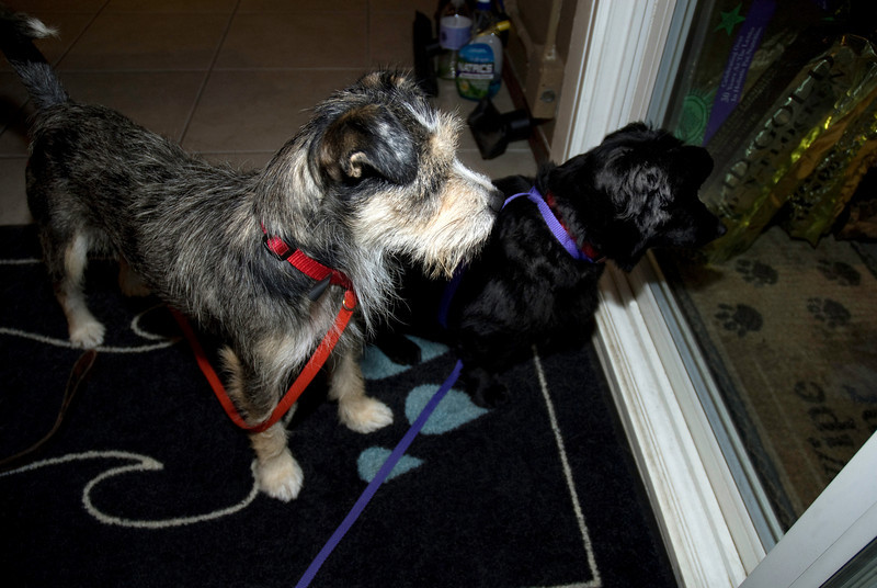 "Sigrid & BooBoo: ""Wait - isn't anyone going to adopt US? Come back, people!!""<br />  <a href=""http://www.ThreeRiversRescue.com"">http://www.ThreeRiversRescue.com</a>"