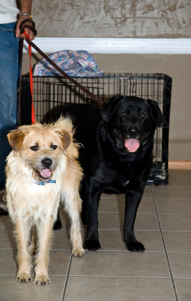 """Benji"" & Roxanne, hoping that their perfect adopters will arrive at any moment....<br />  <a href=""http://www.ThreeRiversRescue.com"">http://www.ThreeRiversRescue.com</a>"