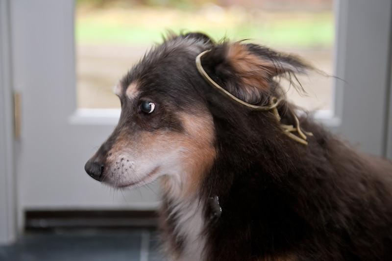 Elliot in spaghetti profile-North Bend, WA 1-30-2012