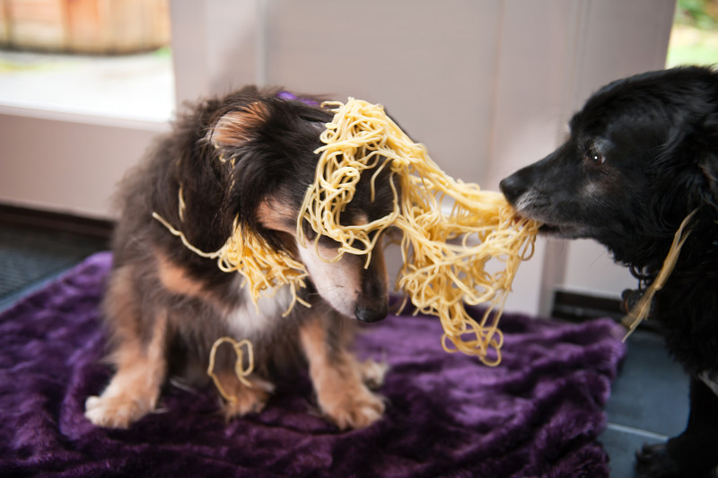 Ollie stealing Elliot's pasta-North Bend, WA 1-30-2012