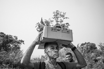 A man takes plants to sell them in the Colombian territory to return to his country with food. Cúcuta, Colombia. Photo: Dany Krom.