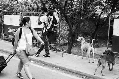 Exodus of Venezuelans crossing the border with Colombia through irregular routes due to the lack of documents and also because of the closure of the borders by the Venezuelan regime. Photo: Dany Krom. / Éxodo de venezolanos cruzando la frontera con Colombia por vías irregulares debido a la falta de documentos y también por el cierre de las fronteras por parte del régimen de Venezuela. Foto: Dany Krom