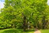 VT WOODSTOCK Marsh_Billings_Rockefeller National Historical Park MOUNT TOM ROAD MAYAF_MG_5090MMW
