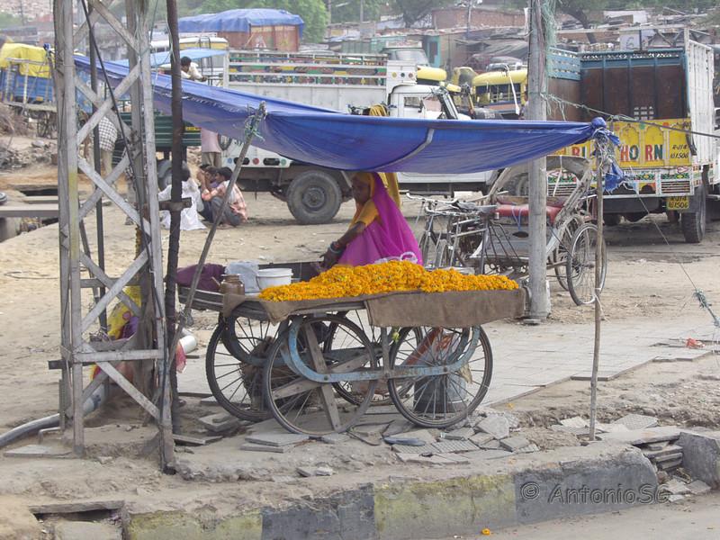 Jaipur-Amber-Fatherpur_Sikri024