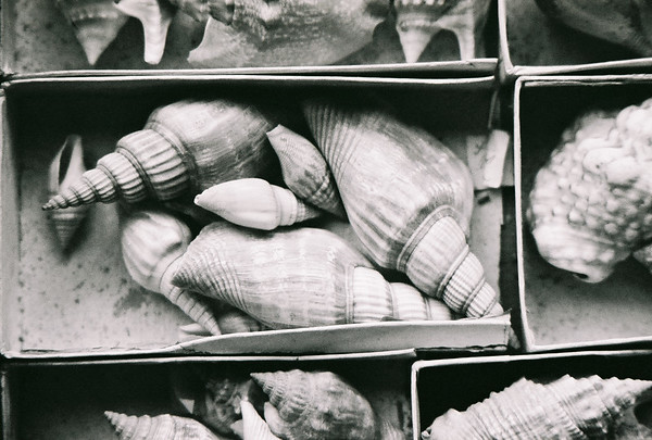 2003-09-09 SHELL BW IMAGES
