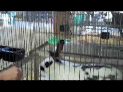 Quartz Glen Videos