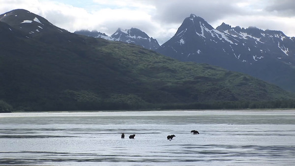 Grizzly Bears of Uyak Bay