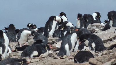 Falkland Islands Wildlife
