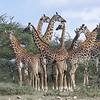 Tanzania Highlights