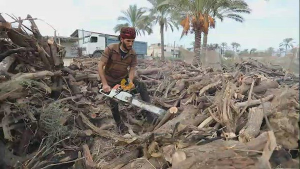 Palestinian lumberjacks cut and prepares firewood for sale and production of charcoal at a workshop