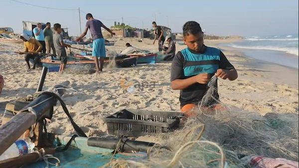 Palestinian fishermen sort out crabs