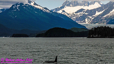 Obst Photos Nikon D300s Obst Adventure Travel Alaska Image 7748