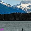 Obst Photos Nikon D300s Obst Adventure Travel Alaska Image 7740