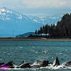 Obst Photos Nikon D300s Obst Adventure Travel Alaska Image 7763
