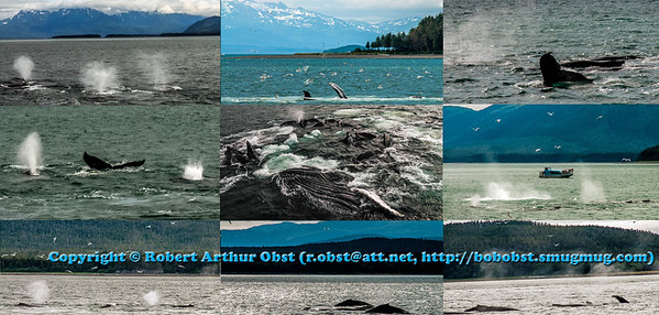 Obst Photos Nikon D300s Obst Adventure Travel Alaska Image 7840