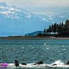 Obst Photos Nikon D300s Obst Adventure Travel Alaska Image 7765