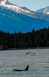 Obst Photos Nikon D300s Obst Adventure Travel Alaska Image 7732