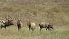 San Simeon Elk