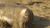 Elephant Seal Rookery 12-24-18