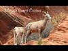 Mojave Desert Critters
