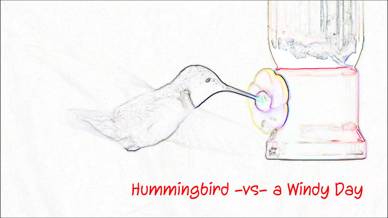 Hummer vs windy day