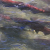 Hatchery Fish