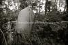 LT 592  Old Jewish Cemetery  KAUNAS, LITHUANIA
