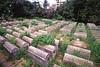 SEA 1117  Jewish Cemetery  YANGON, Myanmar (Burma)