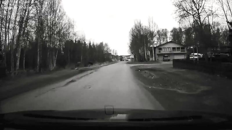 west 41st moose