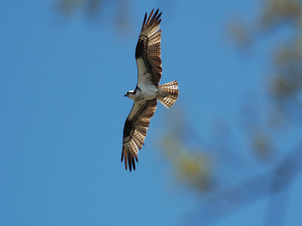 Wildlife Documentary Trailer - Winged Migration Falls of the Ohio State Park