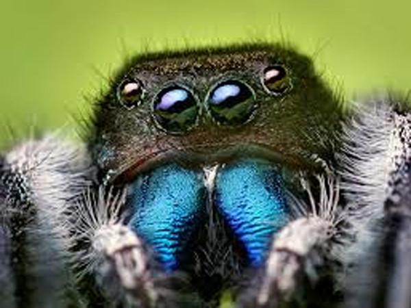 Arachnids - Short Documentary Intro