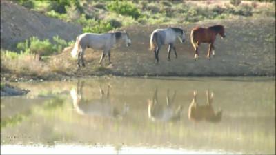 Sand Wash Basin Horses Videos