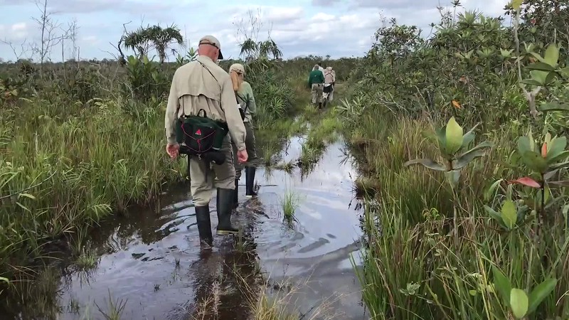 Guide Bret Whitney takes us out in the field on a damp morning underfoot in Virua NP in northern Brazil!
