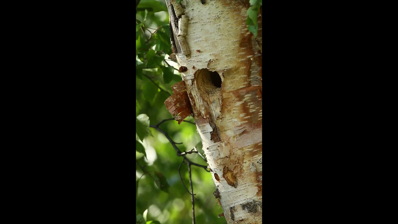 woodpecker 02