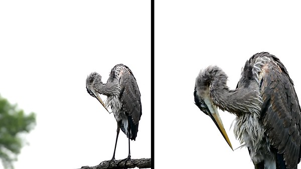Heron-Split Screen