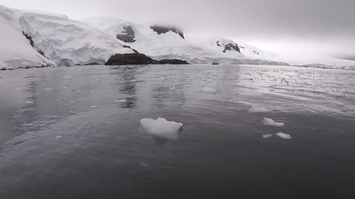 "Video 6 - Antarctic Peninsula and the South Shetland Islands - We left the eastern side of the Antarctic Peninsula behind to round the tip, bound southwest for Trinity Island (Mikkelsen Harbour and d'Hainaut Island) and Cierva Cove (16 February).  The following day, in the South Shetland Islands, we made our final landing — and (for some) the ""Polar Plunge""! —  at Half Moon Island.  Two seabirding days were required to make the crossing of the Drake Passage, which was mercifully calm, even in the vicinity of Cape Horn.  We completed our voyage back at Ushuaia, disembarking Ortelius on the morning of 20 February.  (Video by Bret Whitney)"