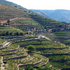 Port wine is nurtured along the terraced slopes of the Douro River east of Porto and just north of Pinhao.