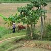 Mai Chau Village Life