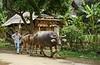 SAPA - Trung Do Village