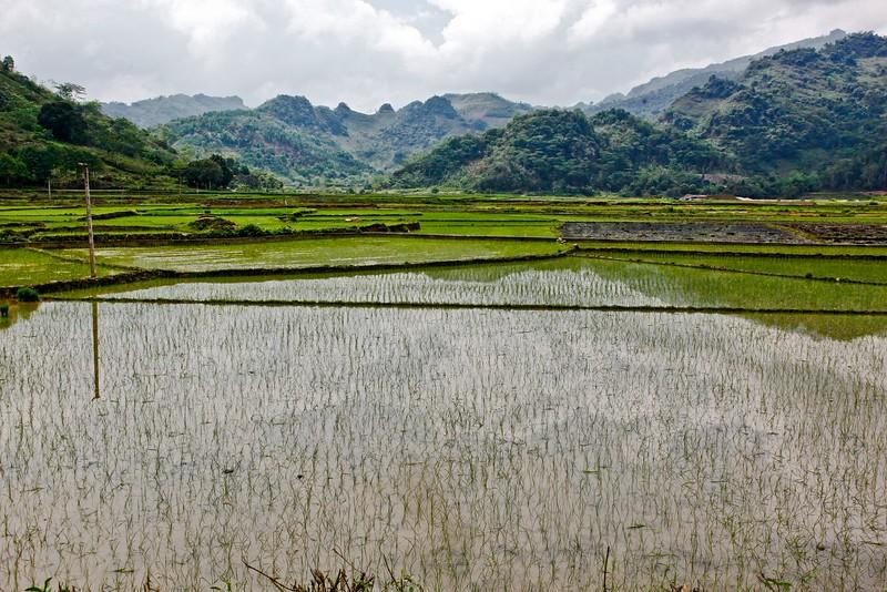 SAPA - Rice fields