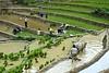 SAPA - Rice terraces