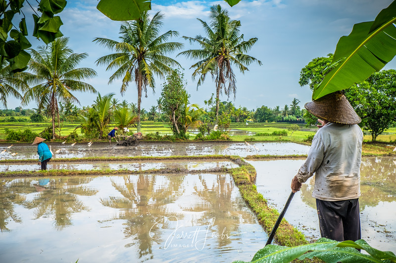 BalineseRiceFarmer1-5387.jpg