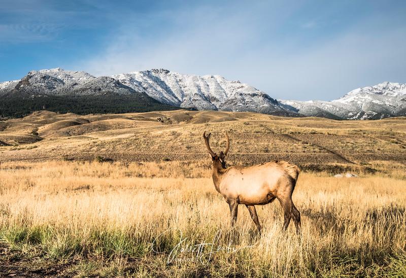 Elk2.300-2248.jpg
