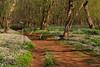 VA MANASSAS BULL RUN REGIONAL PARK BLUEBELL TRAIL APRILAC_MG_7680MMW