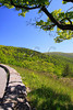 VA SNP APP TRAIL SAWMILL RIDGE OVERLOOK MAYJI_MG_1434SSW